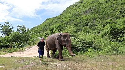 Paul Barton é apaixonado por elefantes.