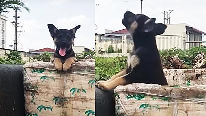 Homem resgata cachorro abandonado em caixa de isopor em beira de estrada.