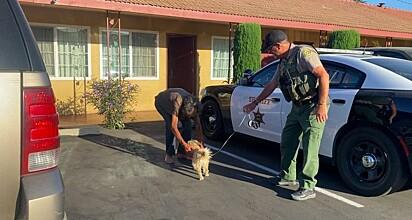 O cachorro havia sido pego por uma família, que acreditou que o pequeno vivesse nas ruas sozinho.
