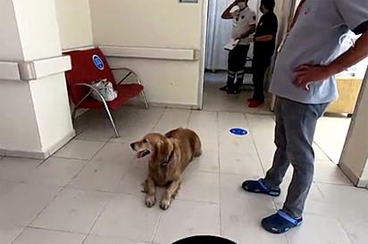 O cachorro permaneceu no local até a alta da sua tutora.