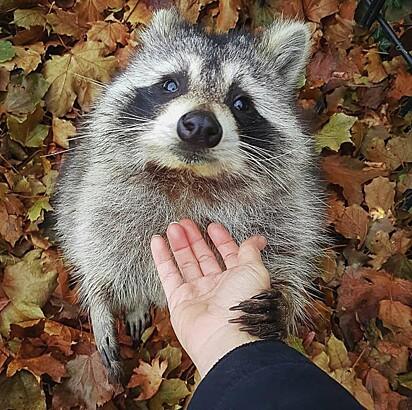 Little Hands influenciou Linda a ajudar outros animais.