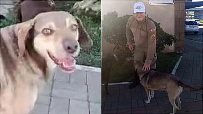 Cachorro de rua ajuda policial a deter suspeito de furto em Santa Catarina.