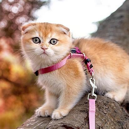 A gatinha Cleo.