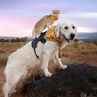 Cleo adora pegar uma carona nas costas do seu irmão.