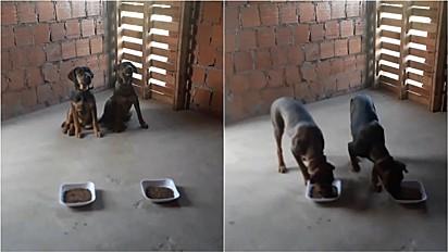 Cães aguardam tutor terminar oração pelas famílias.