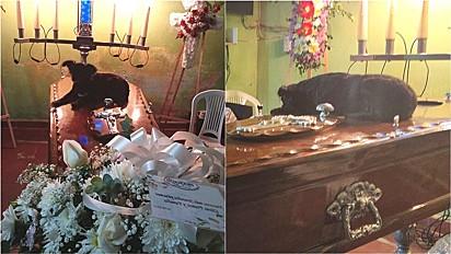 Cachorra se acalma ao deitar-se no caixão do seu dono.