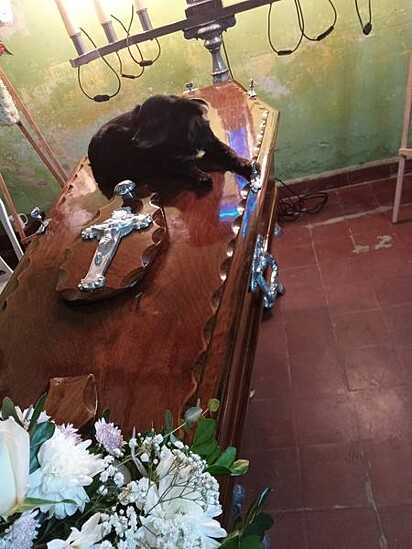 A cadelinha Shirley, de 12 anos, perdeu seu tutor no dia 9 de junho.