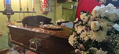 A cachorrinha inquieta só se acalmou quando deitou-se no caixão.