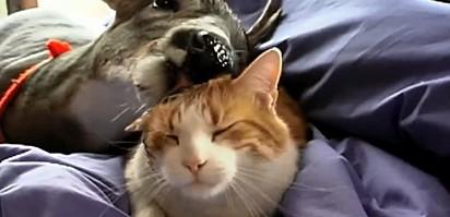 Hoppy e o gatinho Tiptree.