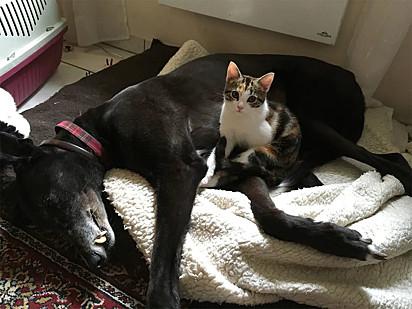 Mini Kitty logo fez amizade com o seu irmão canino.