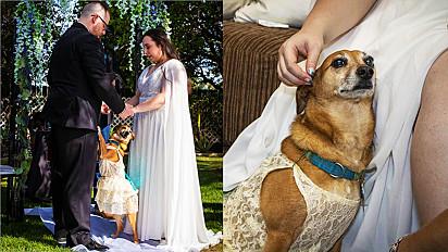 Cadela participa de casamento de tutores e torna tudo ainda mais especial.
