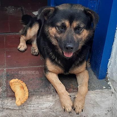 O cachorrinho Doutor González.