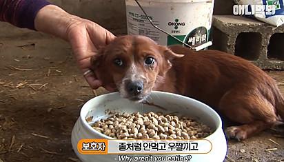 O cachorrinho ficou sem apetite com falta da sua mãe adotiva.
