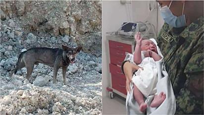 Vira-lata late insistentemente para motoqueiro para que ele o acompanhasse até local em que bebê foi abandonado.