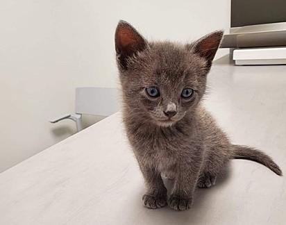 O gatinho Félix.