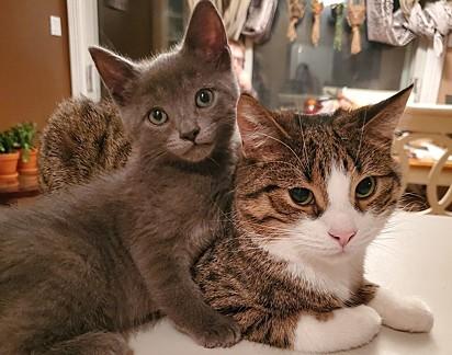 Félix com o gato malhado malhado, Runty.