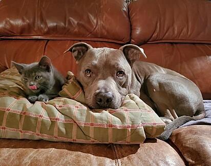 Félix e o cão Artilheiro.