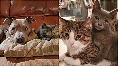 Gato faz amizade com todos os animais da família.