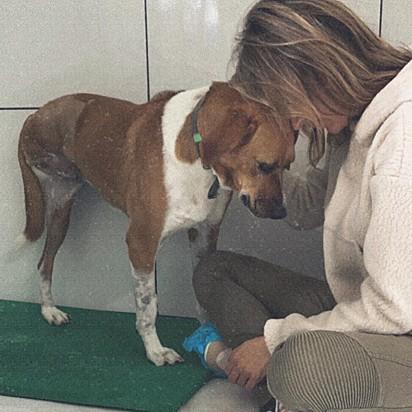 A cachorrinha Caramela foi rejeitada pelo seu ex dono.