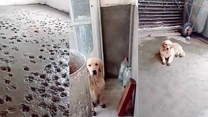 Cachorros decoram com suas patinhas piso com cimento fresco.
