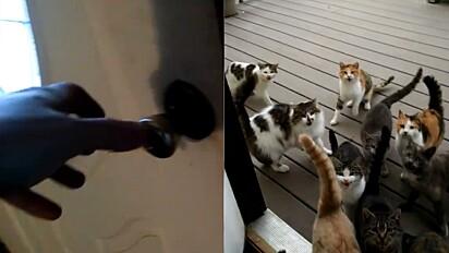 Gatos fazem serenata na porta de casa para receberem ração.