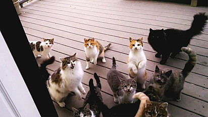 Gatos fazem serenata na porta de casa de rapaz que os alimentou.