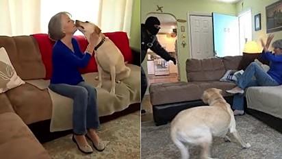 Tutores fazem simulação para testarem a coragem dos seus cães.