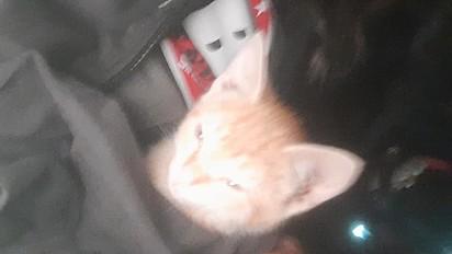 O gatinho Mal Criado.