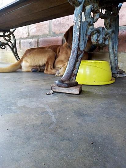 Jou foi encontrado embaixo do banco na varanda.