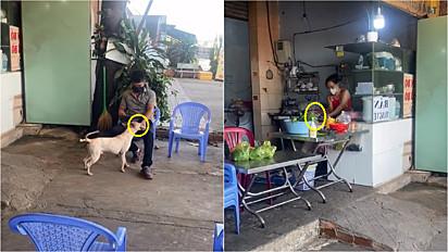 Cachorro ajuda dona na contabilidade do restaurante.