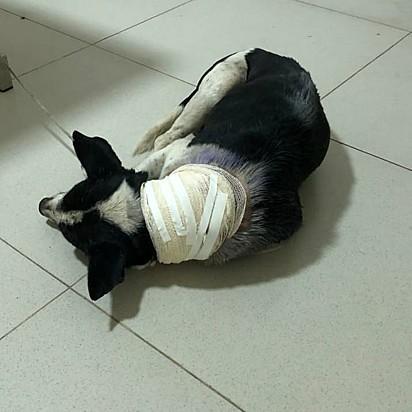 O cãozinho recebeu todo o cuidado necessário.