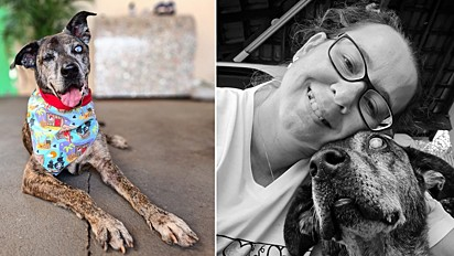 Cachorro idoso, cego e amputado é adotado, após viver dez anos em abrigo.