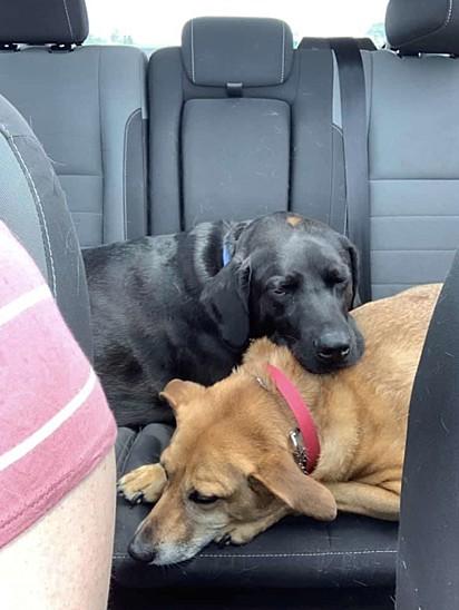 Eddy acalma sua irmã durante as viagens de carro.
