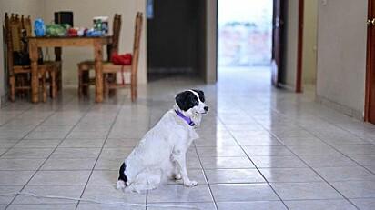 A cachorrinha Lucky.