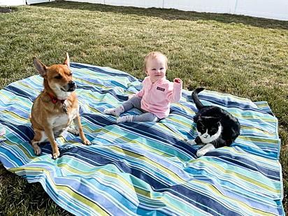 O cachorrinho, Ivan Doggo, a bebê e o gatinho que não quis aparecer na foto da publicação.