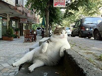 A gatinha Tombili.