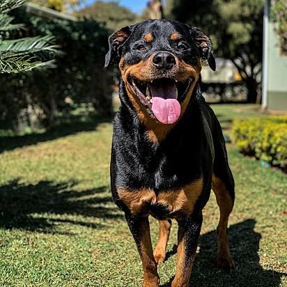 A cachorra Zara.