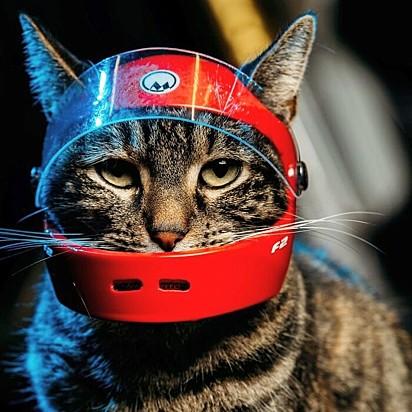 A gatinha Cathode.