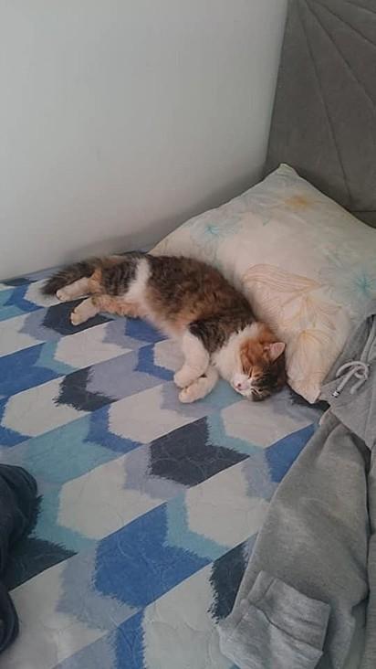 Essa é a minha folgada, e o detalhe é que essa cama é da vizinha - comentário da internauta.