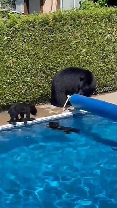 A família foi flagrada aproveitando a piscina.