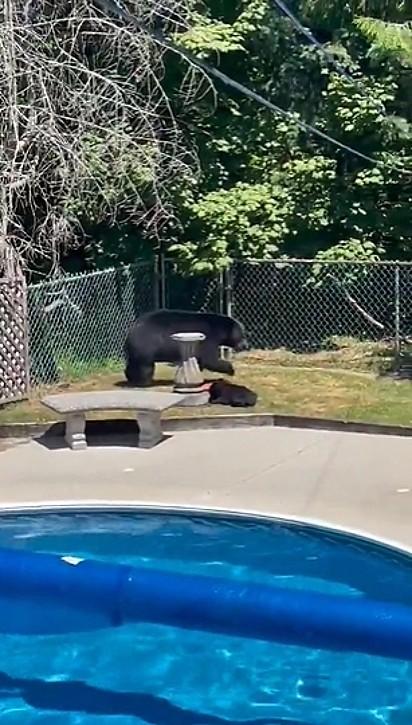 Após, os ursos pegaram um solzinho e partiram.