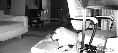 Lyla tem muita dificuldade para dormir.
