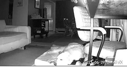 O gatinho pulou para a cama da cachorrinha e se aninhou nela.
