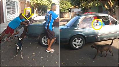 American Bully ajuda a empurrar carro quebrado enquanto gato folgado pega carona.