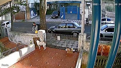 O homem furta a roupa da cadela no portão de casa.
