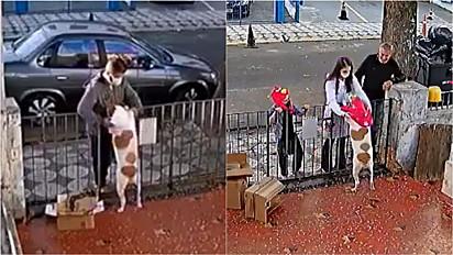 Homem rouba roupinha de cachorrinha em São Paulo.