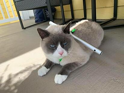 O felino não aprovou a ideia.