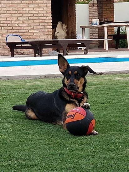 A cadelinha Caipirinha.