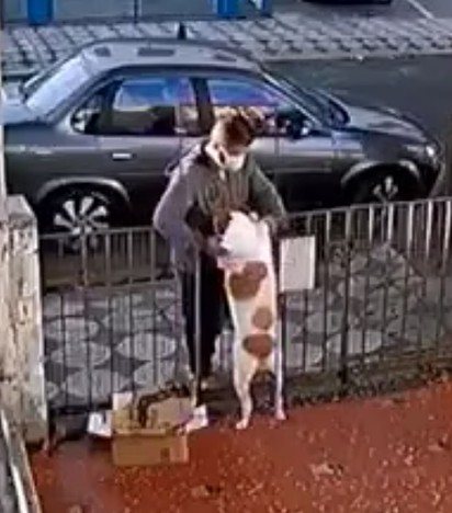 Homem aproveitou a simpatia da cadelinha e roubou-lhe o seu blusão.