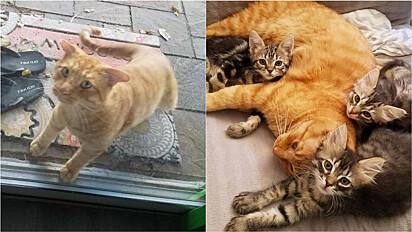 Gato resgatado se torna pai e mentor de gatinhos em lar temporário.